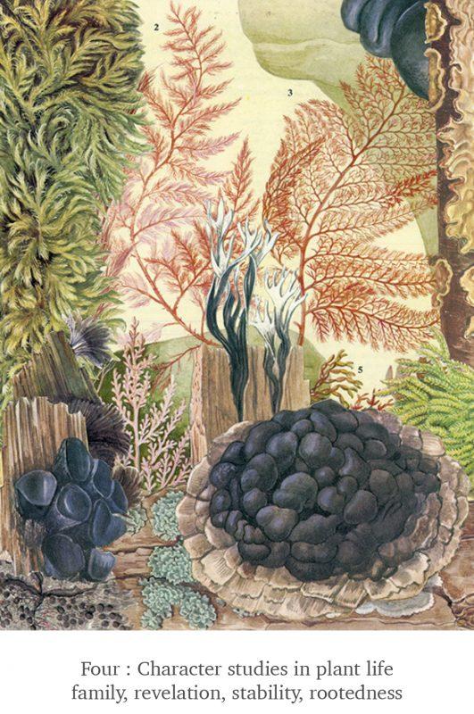 Four - Plant Life - Scissor Snaps