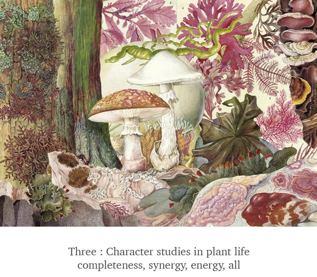 Three - Plant Life - Scissor Snaps